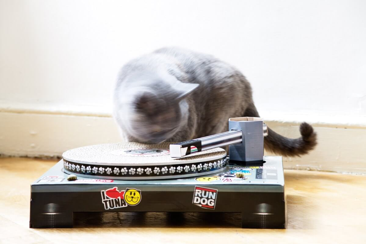 scratch pad turnable cool cat