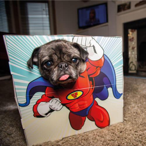 Animal-DogCat-Pet-Photobooth-Superhero-Novelty-Fun-Party-Costume-Frame-Gift-351710246055